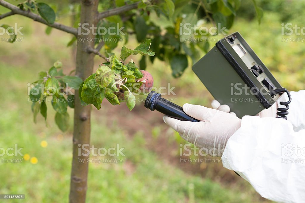 Measuring radiation levels of fruits stock photo