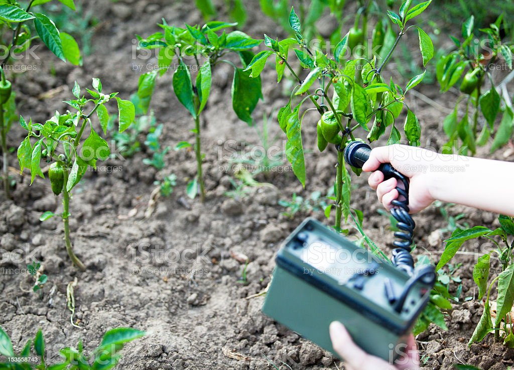 Measuring radiation levels of green peppers stock photo