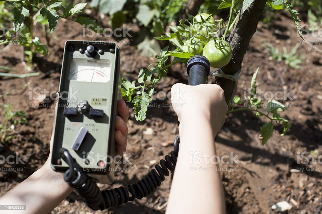 Measuring radiation levels of vegetable stock photo