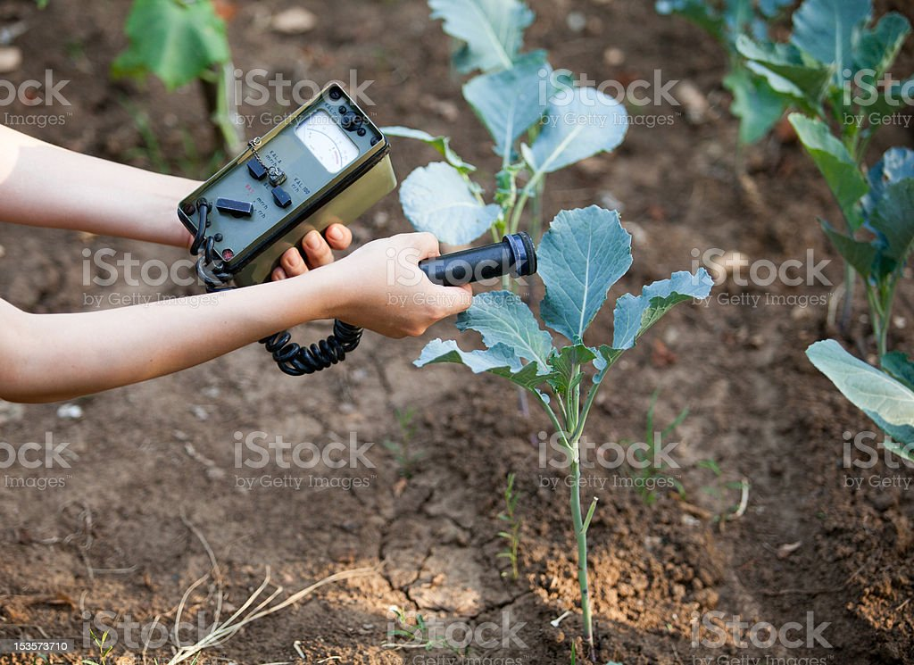 Measuring radiation levels of vegetables royalty-free stock photo