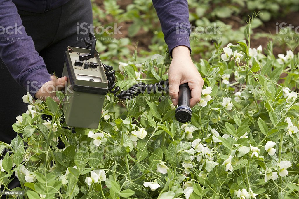 Measuring radiation levels of vegetables stock photo