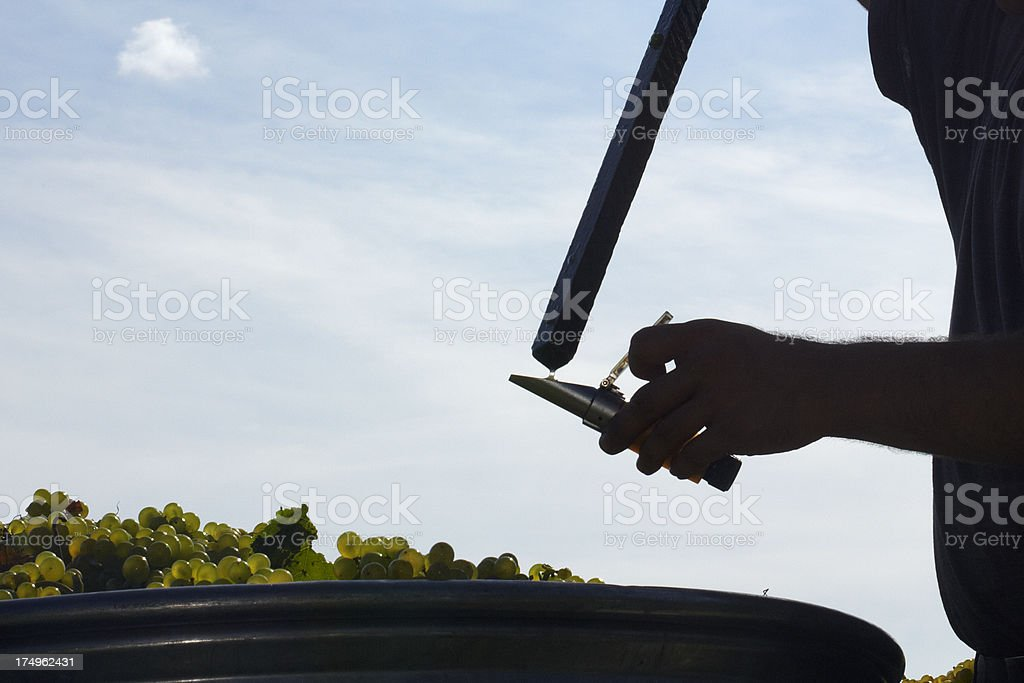 Measuring the alcohol level of grapes stock photo