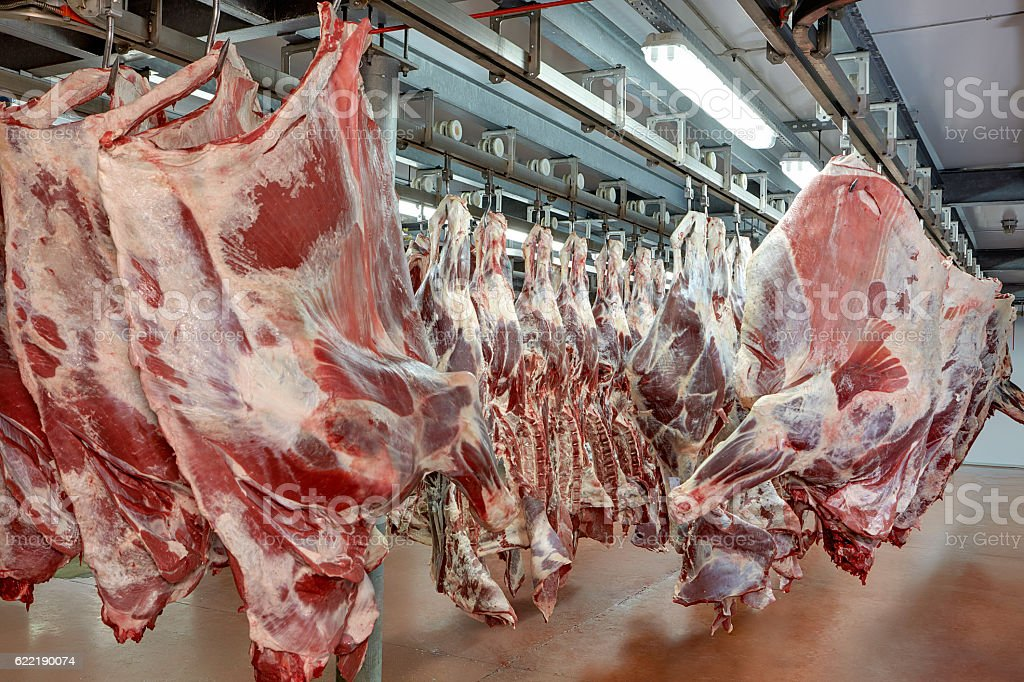meat industry stock photo