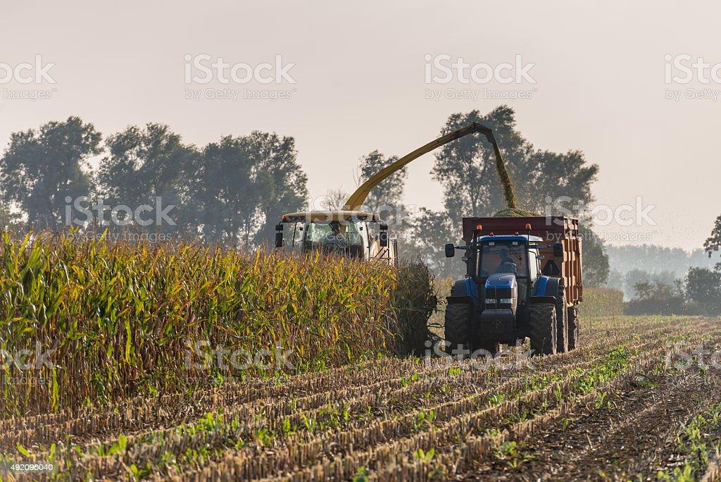 Mechanical harvesting of maize plants stock photo