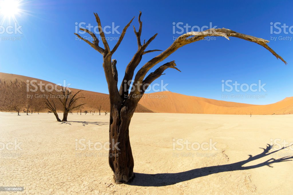 Mecriless sunshine in the Dead Vlei royalty-free stock photo