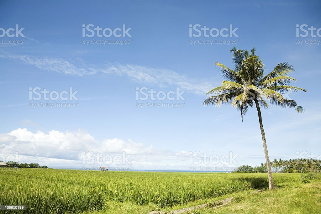 Medewi west Bali landscape royalty-free stock photo