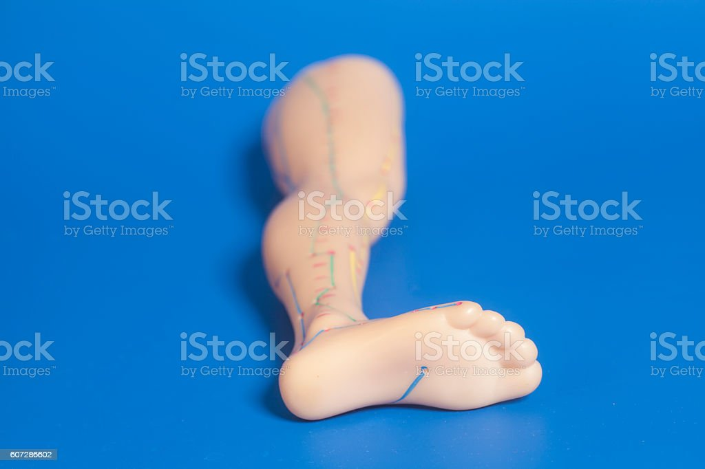 Medical acupuncture model of human feet stock photo