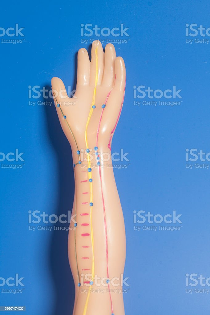 Medical acupuncture model of human hand on blue background stock photo