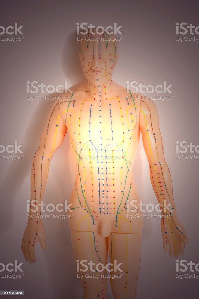 Medical acupuncture model of human on gray background stock photo