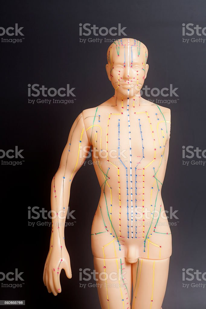 Medical acupuncture model of human stock photo