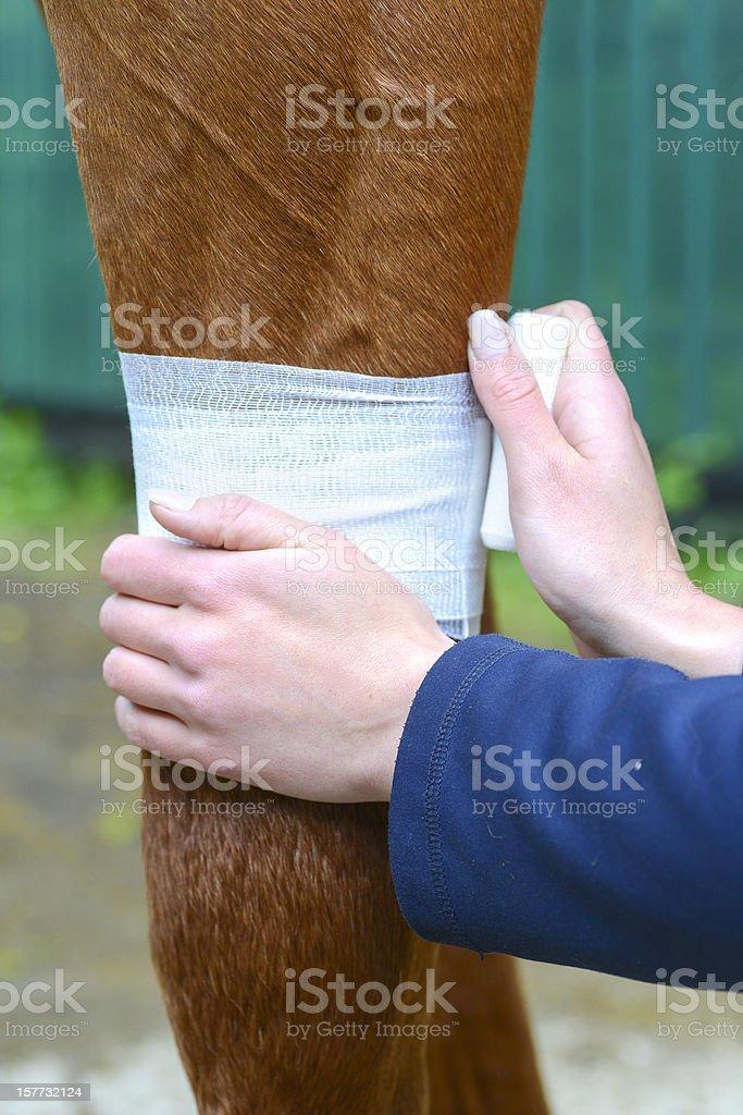medical bandage for horse stock photo