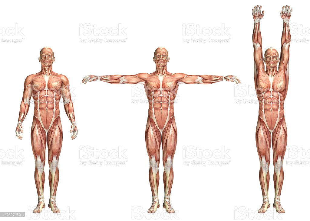 3D medical figure showing shoulder abduction and adduction stock photo