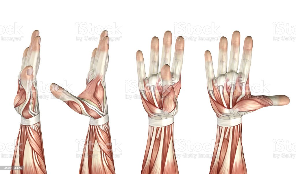 3D medical figure showing thumb abduction, adduction, extension stock photo