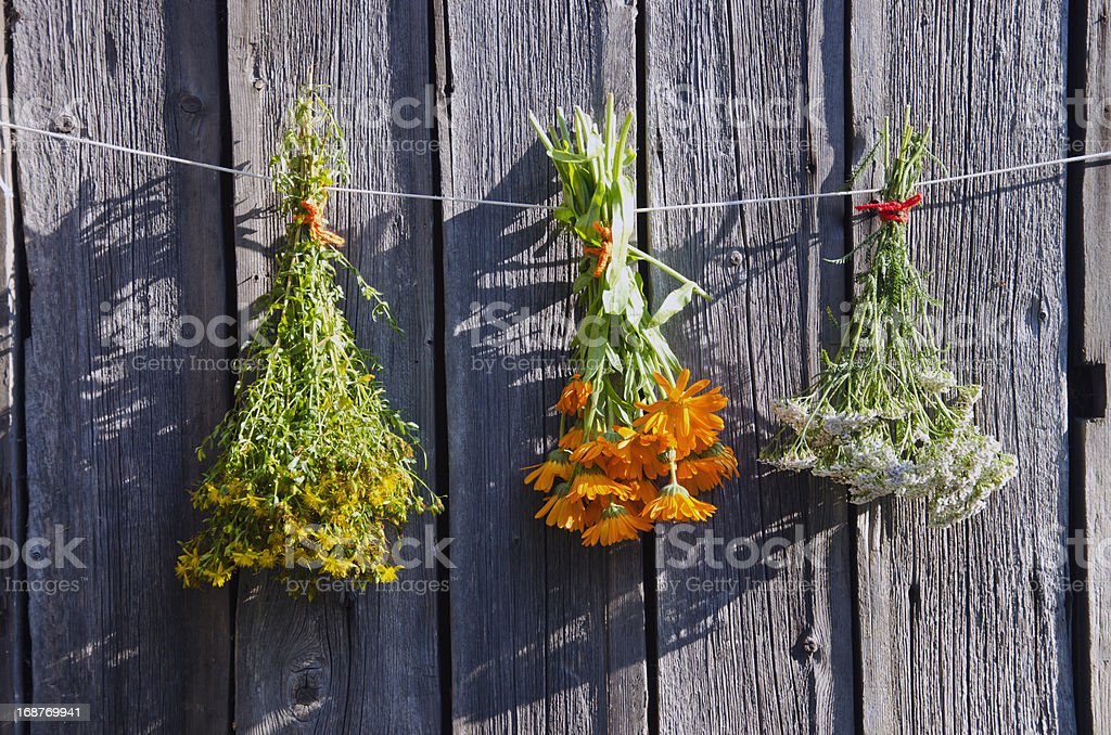 medical herbs bunches on old wooden farm wall stock photo