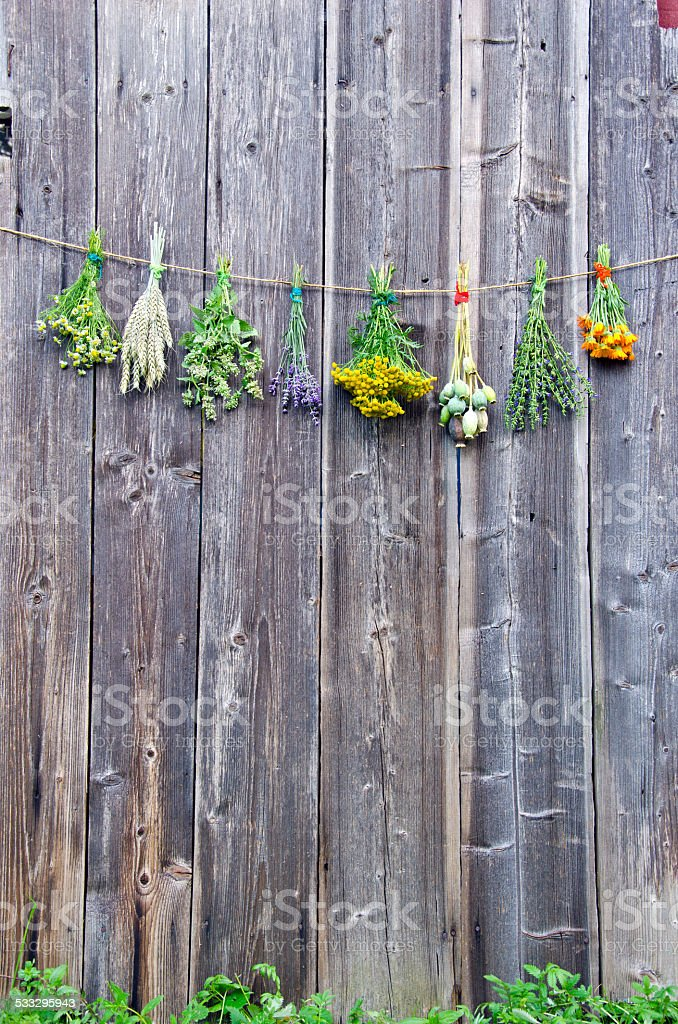 medical herbs flowers bunch collection on old wooden wall stock photo