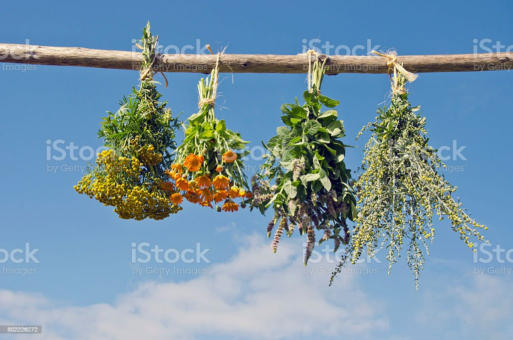 Medical herbs hanged to dry outside stock photo