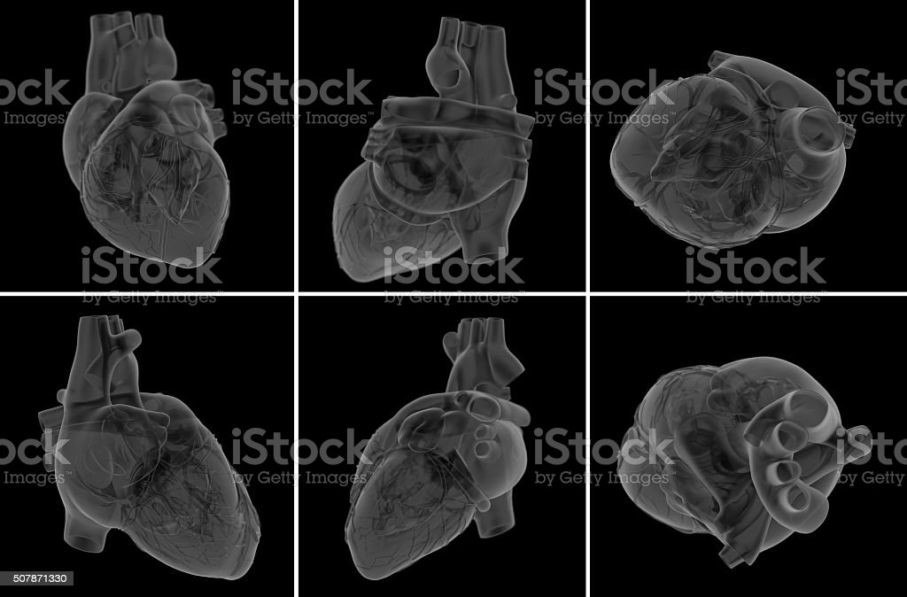 medical  illustration of the heart stock photo