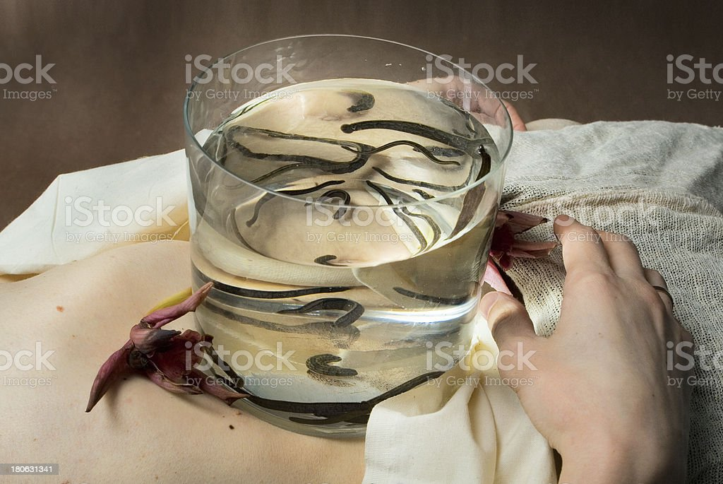 medical leeches royalty-free stock photo