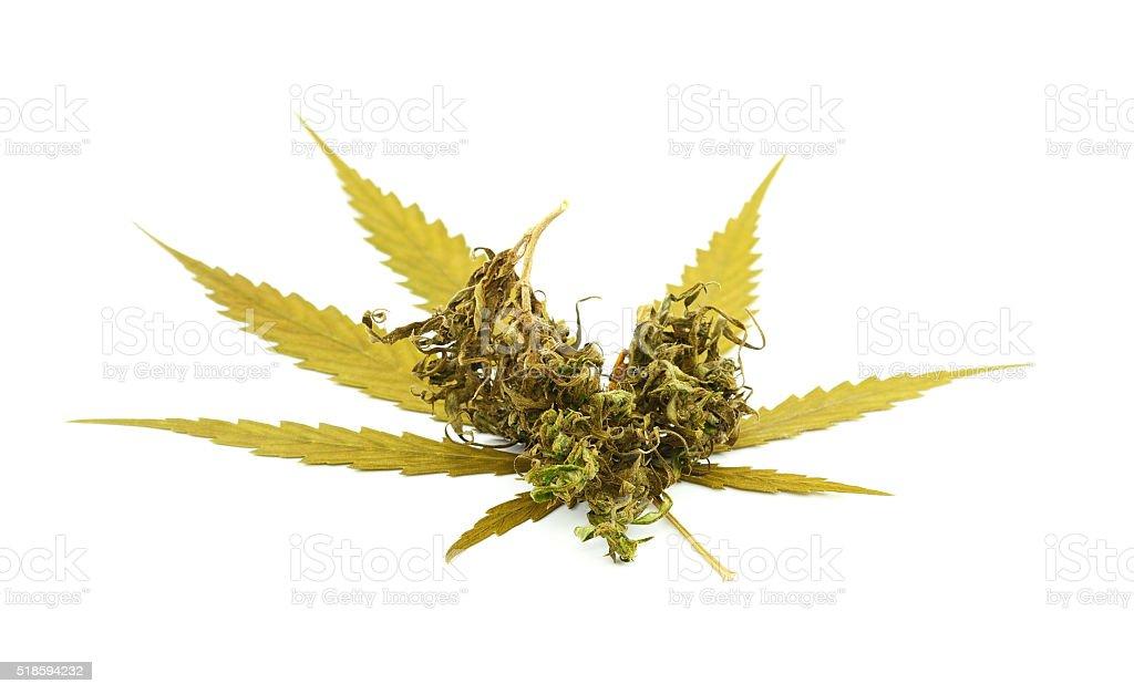 Medical marijuana isolated on white background. Therapeutic and stock photo
