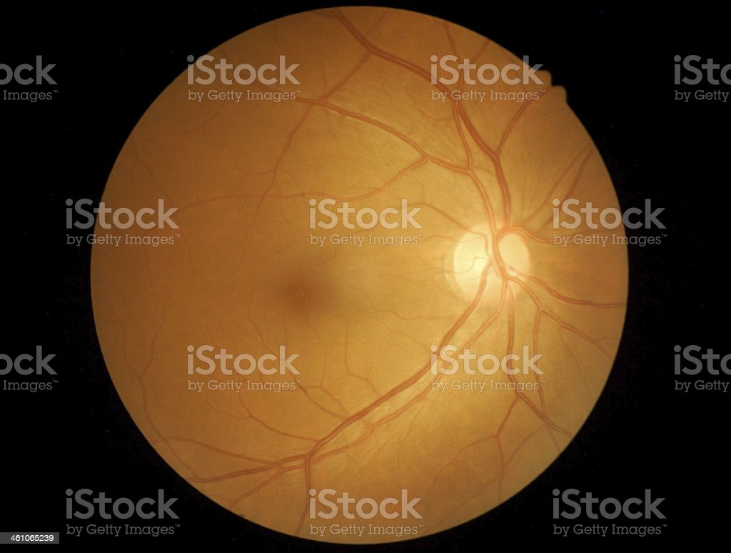 medical photo detailing the retina  human eye stock photo