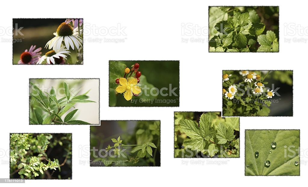 medical plants stock photo