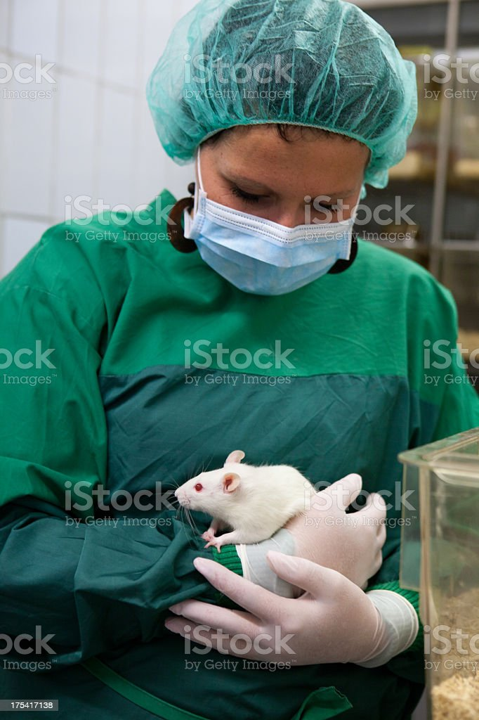 Medical Research: lab assistant with albino rat for animal experiments stock photo