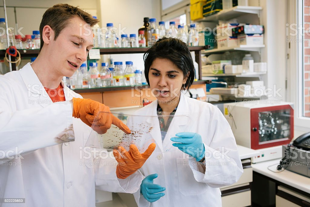 Medical Research: two young researchers analyse a 2-D electrophoresis stock photo