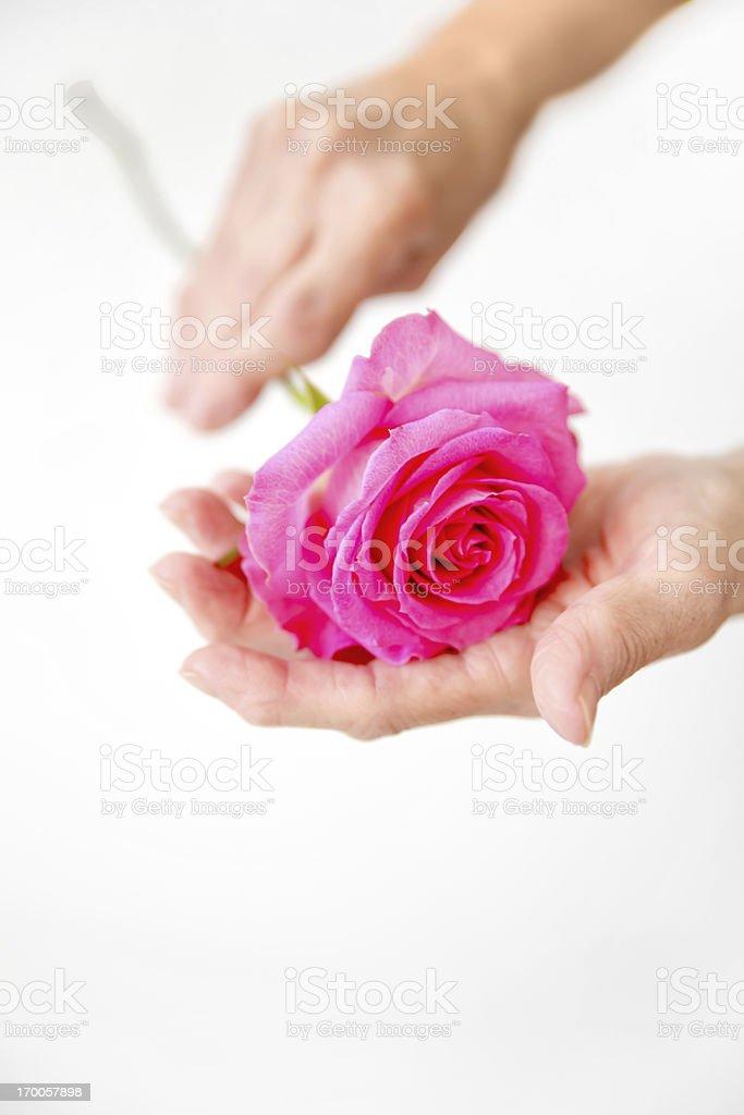 Medical: Rheumatoid Arthritis:Arthritic Seniors hands holding a rose stock photo
