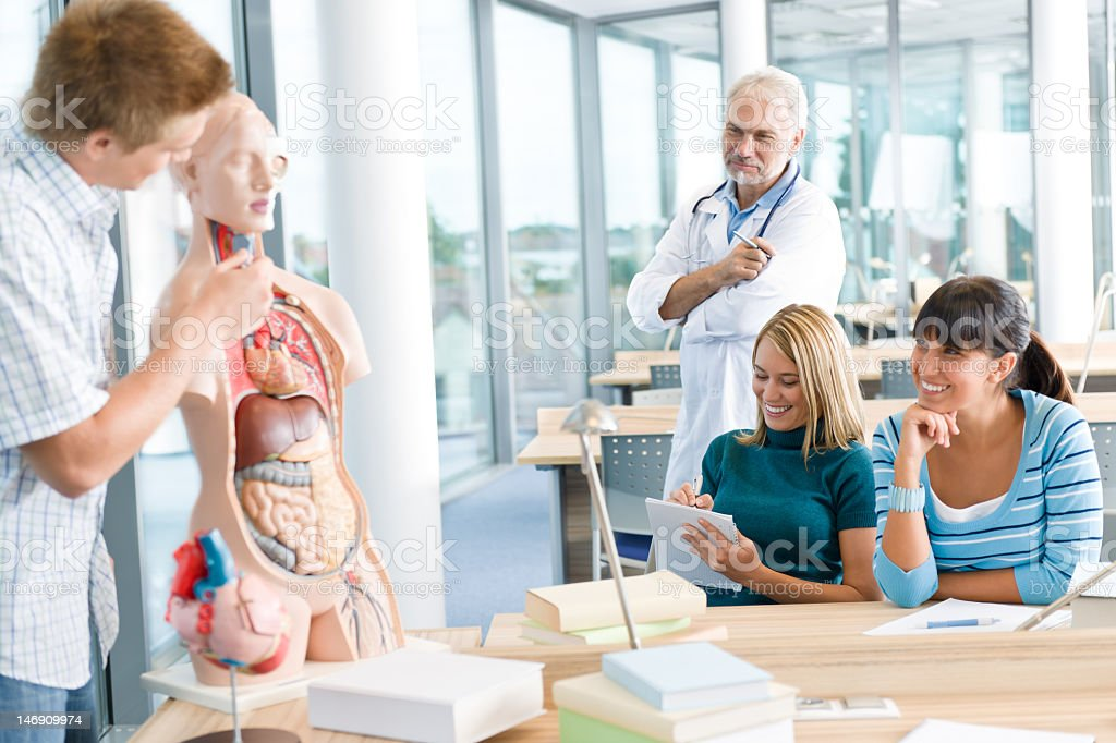 Medical students with professor and human anatomical model stock photo