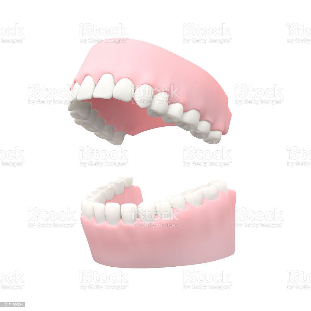 Medical Teeth Model, Denture on White stock photo