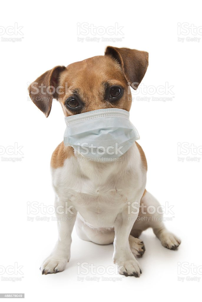 Medical worker dog stock photo