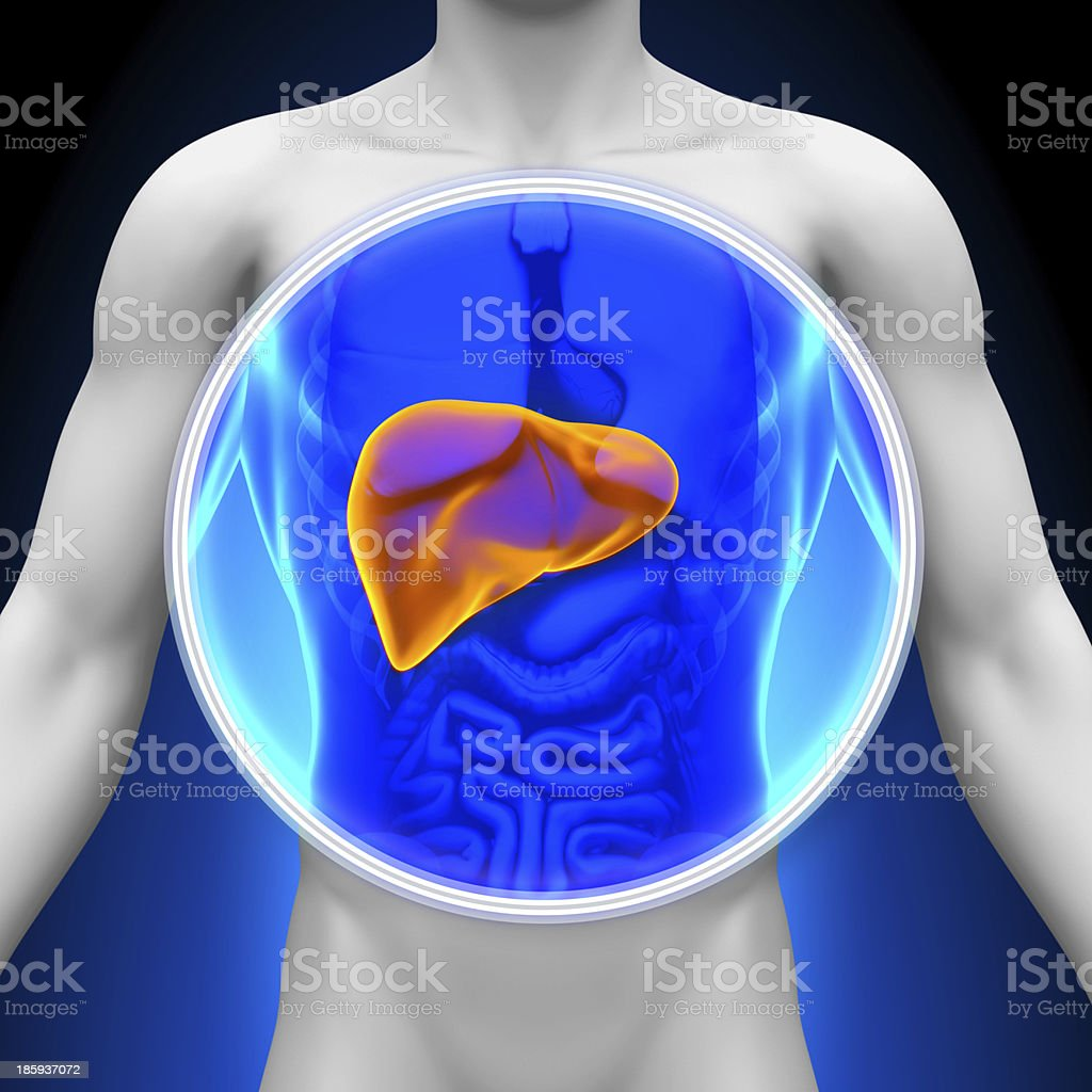 Medical X-Ray Scan - Liver stock photo