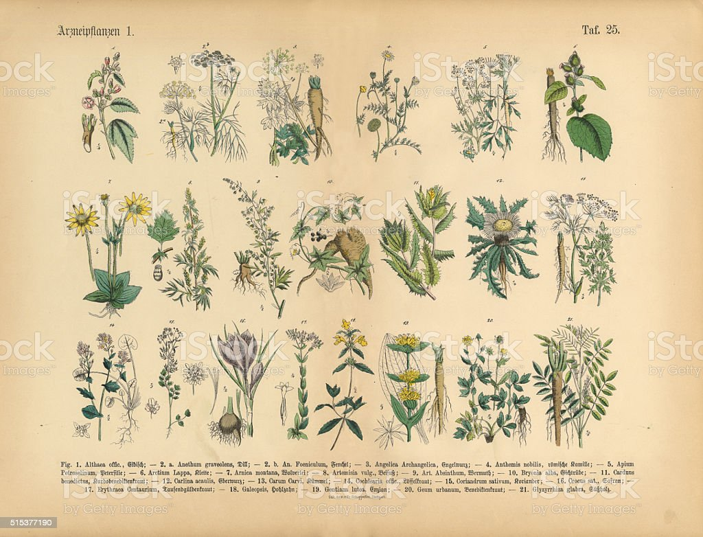 Medicinal and Herbal Plants, Victorian Botanical Illustration stock photo