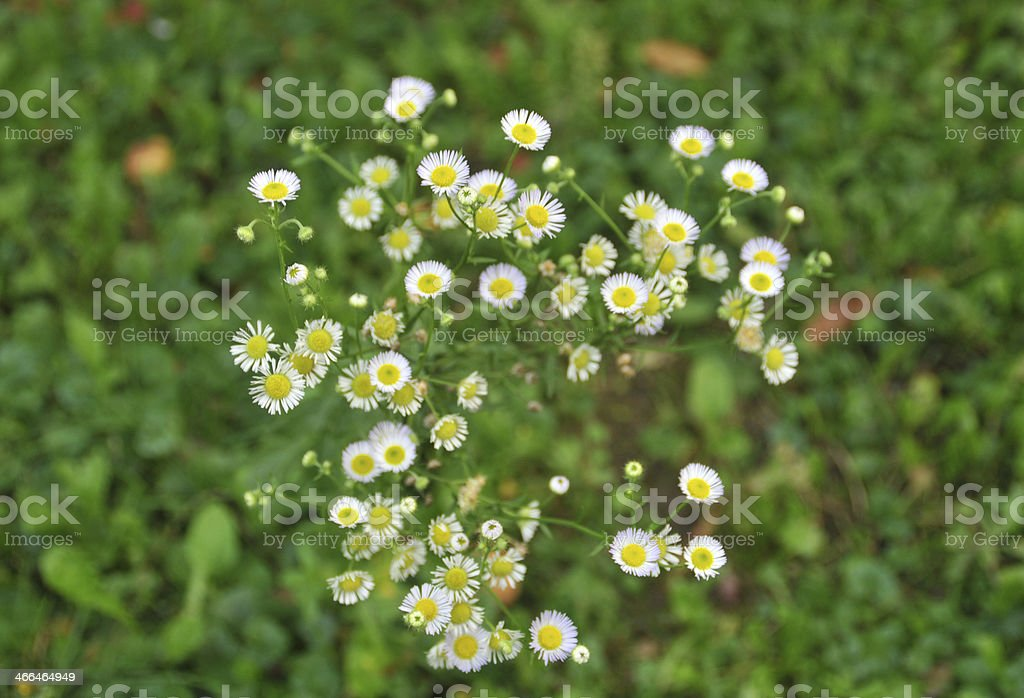 Medicinal flowers stock photo