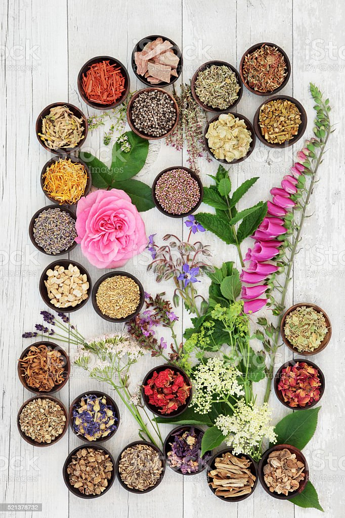 Medicinal Herbs and Flowers stock photo