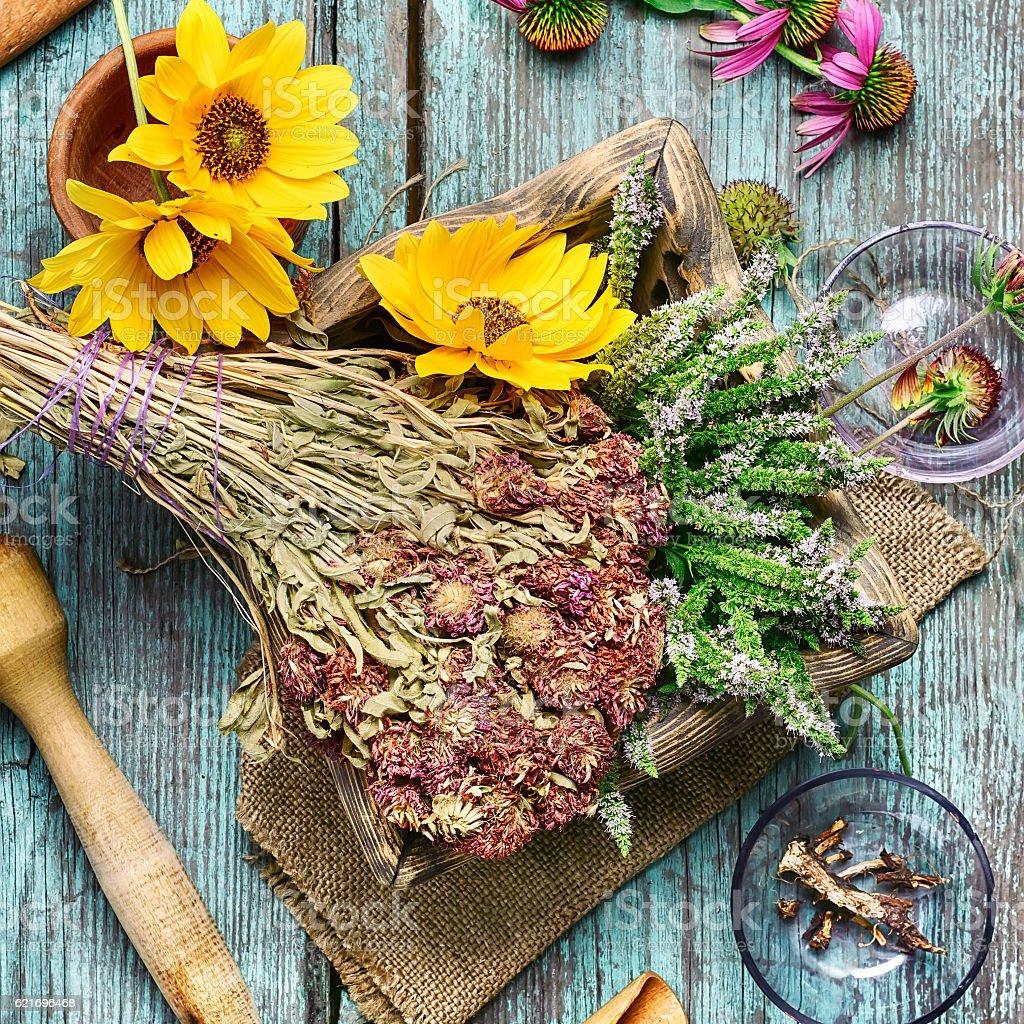 Medicinal herbs and plants stock photo