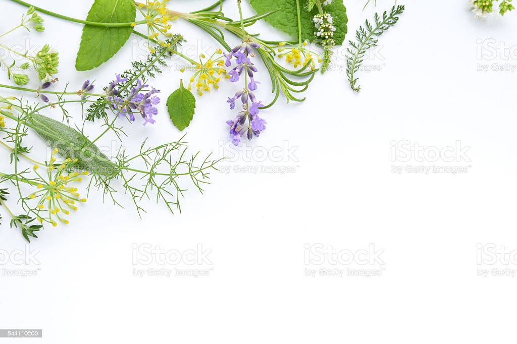 medicinal herbs on white background royalty-free stock photo