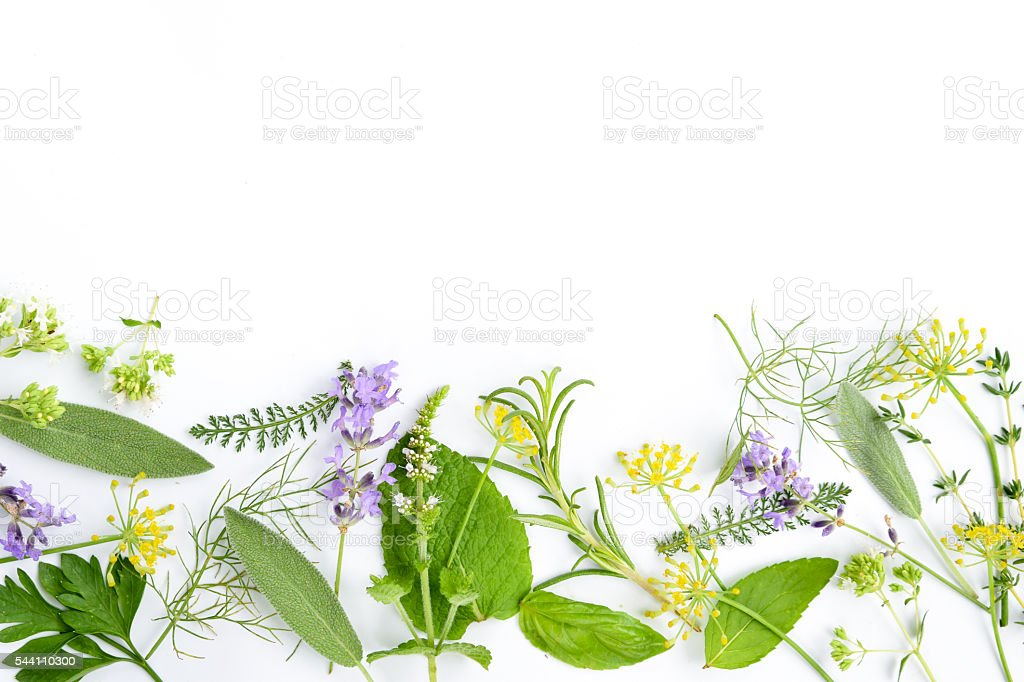 medicinal herbs on white background stock photo