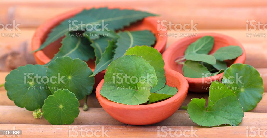 Medicinal herbs royalty-free stock photo