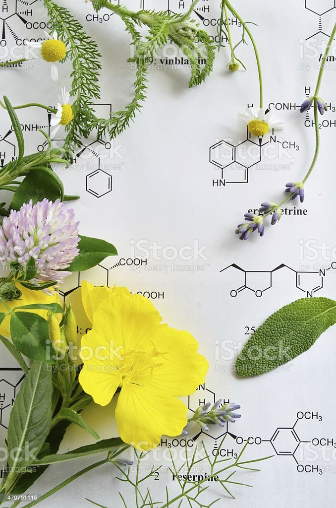 medicinal herbs stock photo
