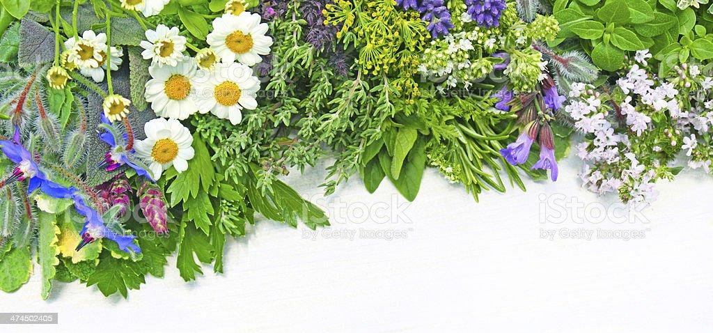 Plantes médicinales photo libre de droits