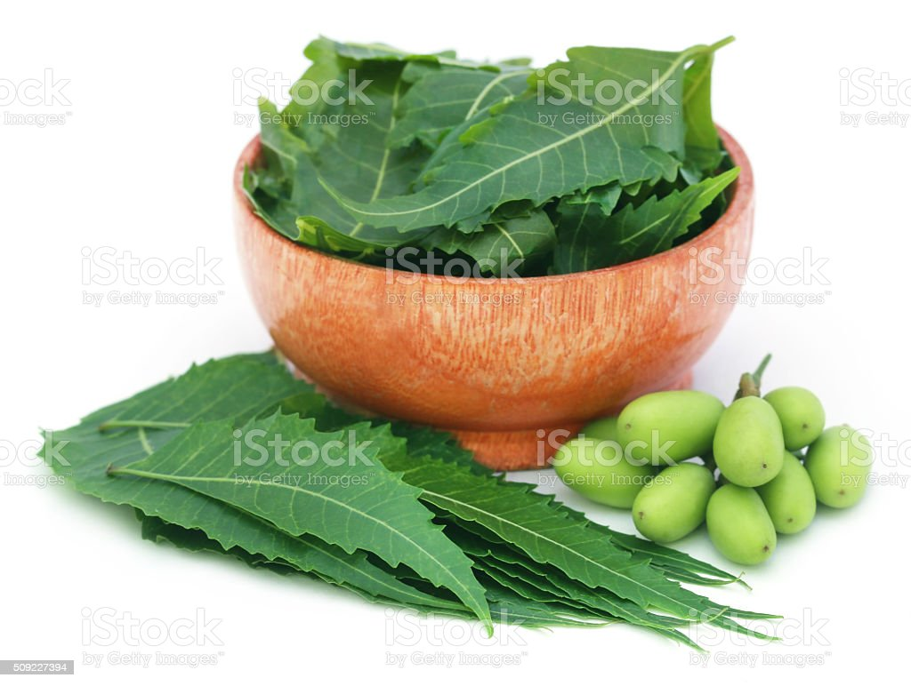 Medicinal neem fruits with leaves in a bowl stock photo
