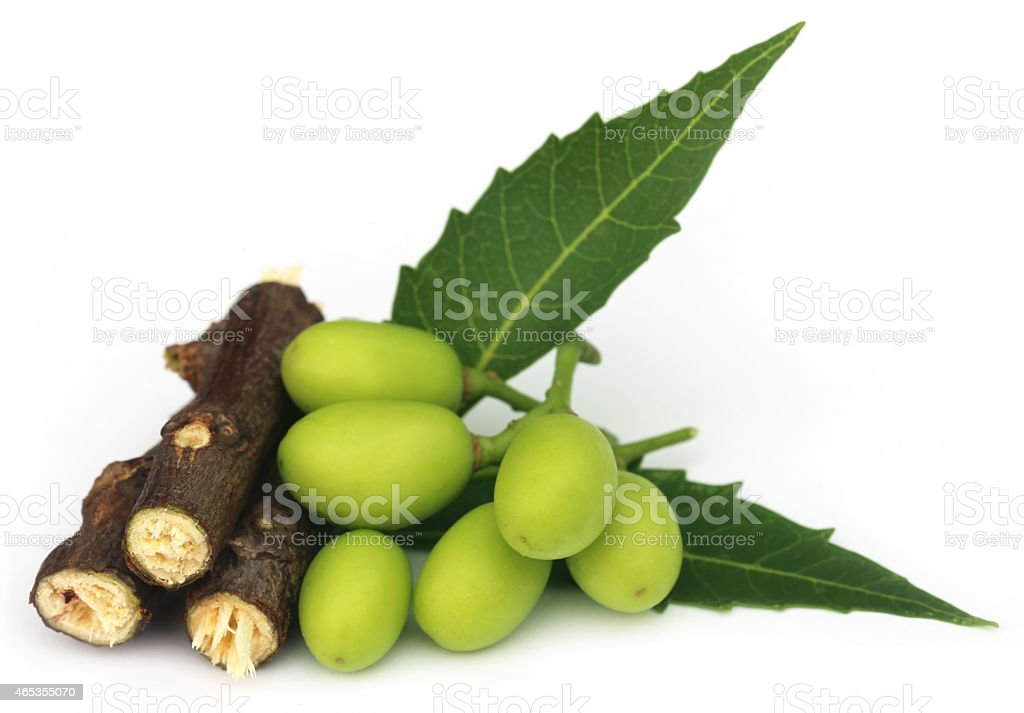 Medicinal neem fruits with twigs stock photo