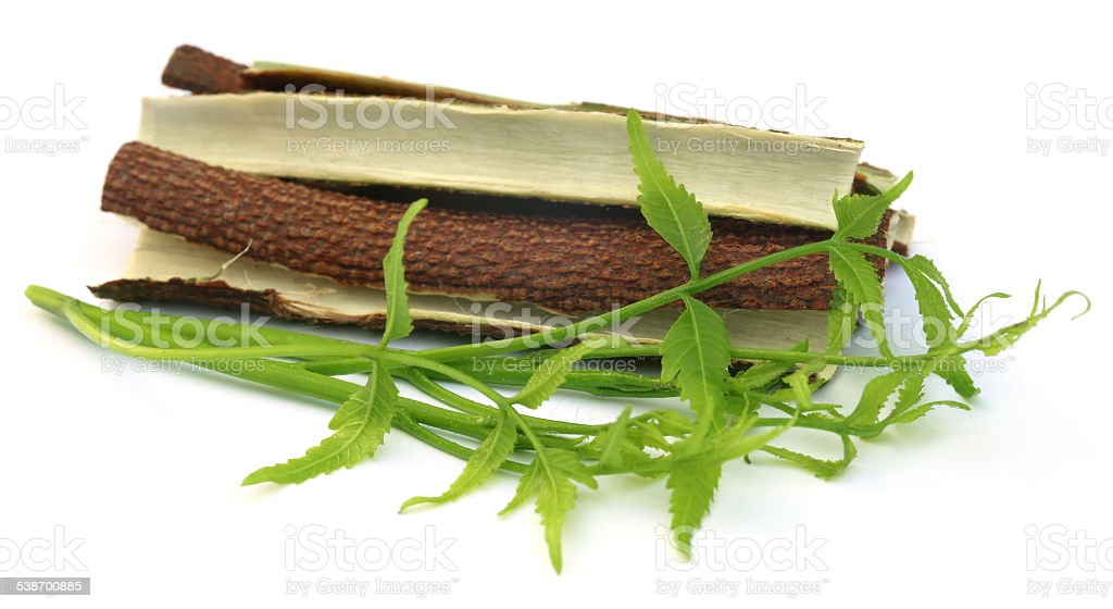 Medicinal neem leaves with bark of tree stock photo