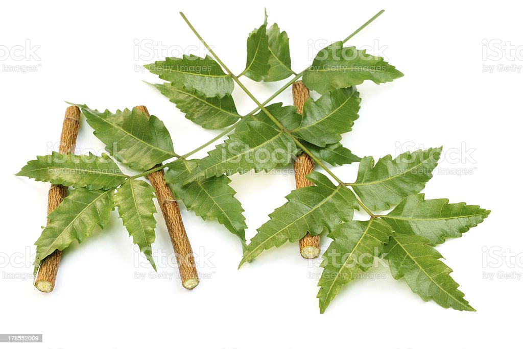 Medicinal neem leaves with twigs stock photo