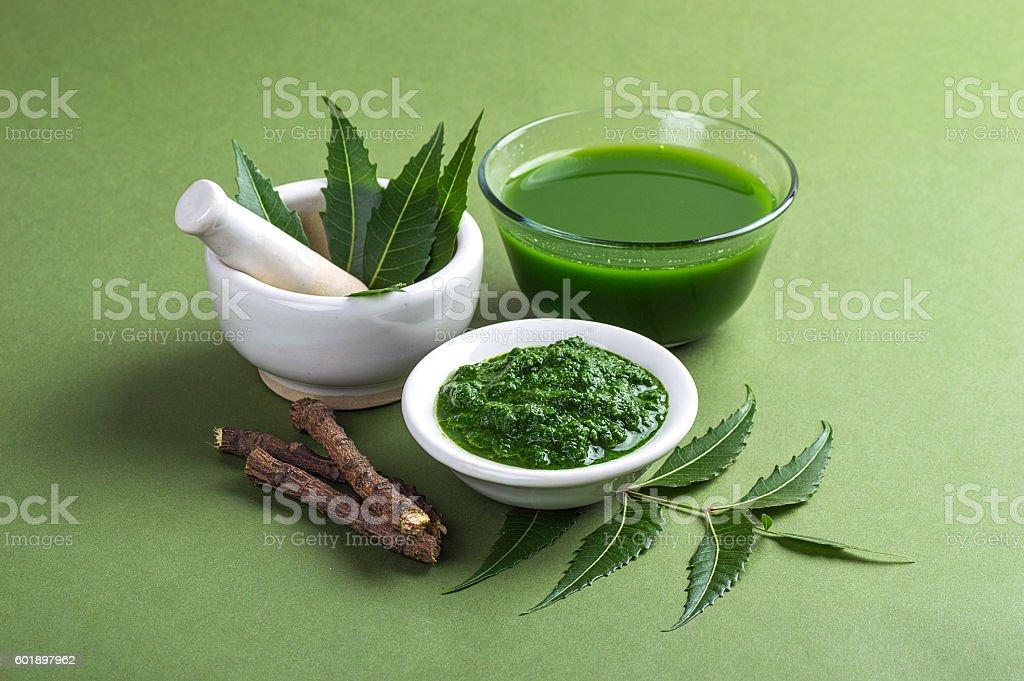 Medicinal Neem stock photo