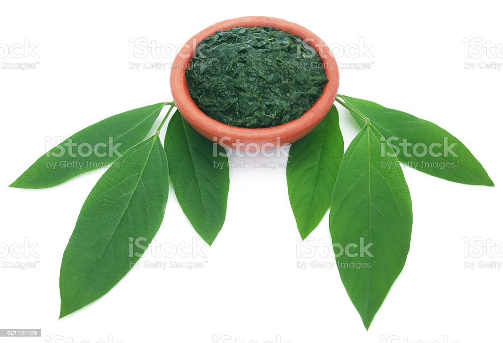 Medicinal pigeon pea leaves with ground paste stock photo