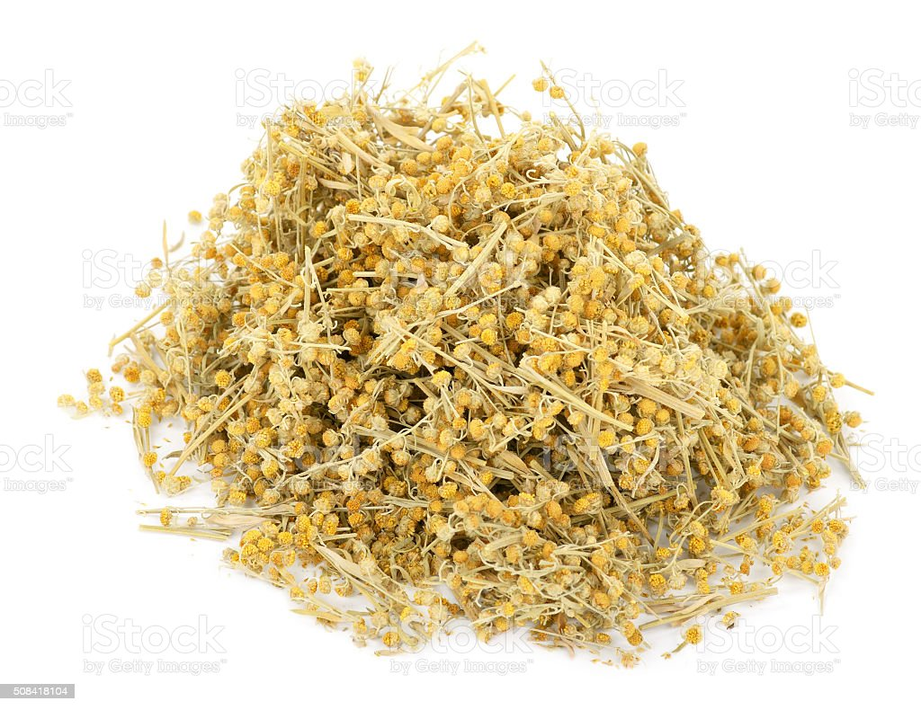 Medicinal plant. Dry Sagebrush stock photo