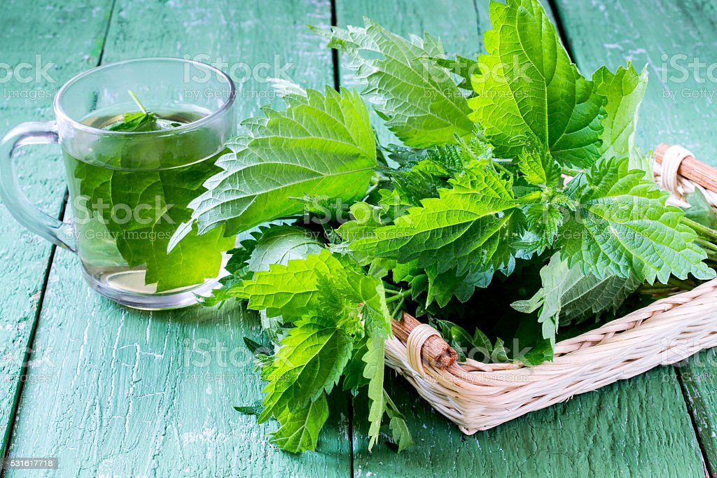 Medicinal plant nettles: fresh leaves and infusion stock photo