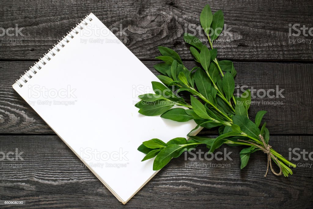 Medicinal plant  Polygonum aviculare or common knotgrass stock photo
